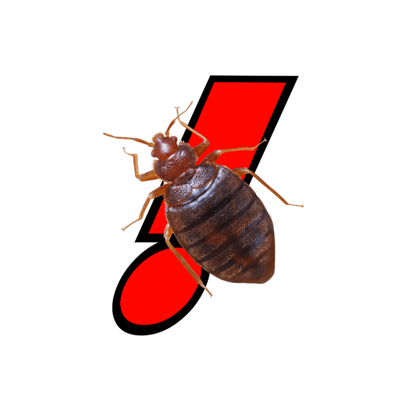 Bed Bug Services Carlsbad